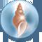 Muschel der Meerjungfrauen