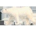 Bild von Eisbär