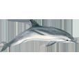 Bild von Delfin